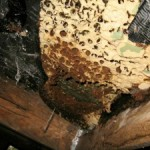 Spray Foam Insulation and Bugs